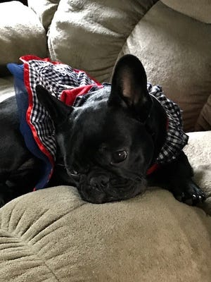 More than 50 people joined the search for Ohso, the Door County puppy that was missing for 70 hours in a forest near her home in Forestville.