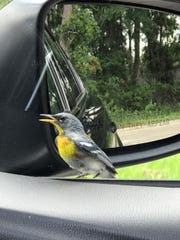 Bird takes a look in the mirror.