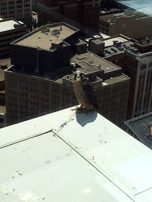 Una visits the 29th floor ledge of Market Tower on Tuesday.
