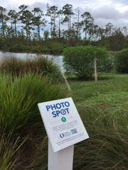 "This is one of the ""photo spot"" locations on the FGCU campus to celebrate the school's 20th anniversary."