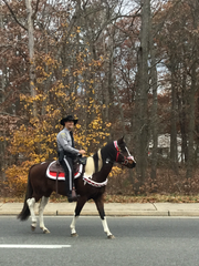 """Officer Brian Stockhoff of the Ocean County Sheriff's Department rides """"Kianti."""""""
