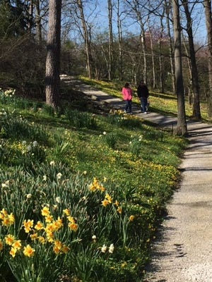 The Stanley Rowe Arboretum on Muchmore Road is part of Indian Hill's planning for 2018.