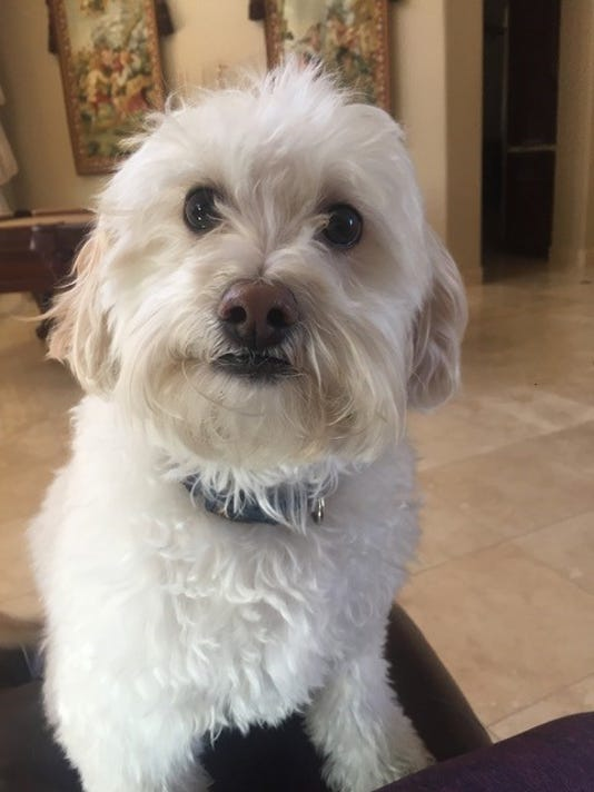 Family Finds Dog Dead Hanging In Mobile Pet Grooming Van
