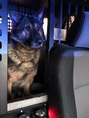 K-9 Balu alerted deputies to seize 14 kilos of cocaine during a traffic stop.
