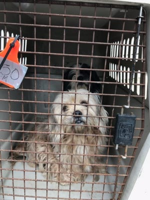 The Animal Protection League, Inc. took in 18 Shih-Tzus and Rat Terrier mixes in an animal hoarding case.