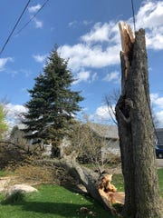 A tree in South Lyon which broke and struck a passing mail carrier. He was listed as critically injured but his condition was later upgraded.