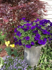 Flowering basket in urn makes for quick and easy gardening