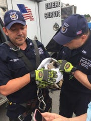 Yonkers Police rescued a kitten trapped in a storm