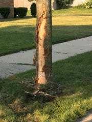 A driver lost control and hit a tree on South 53rd Street, killing his passenger in a crash on July 22, Milwaukee police said.
