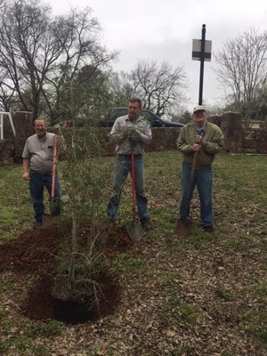 A Yaupon Hollie was planted Monday at Larch-Miller Park, which is on east side of the 900 block along Broadway. Shown, from left, are City of Shawnee Director of Operations James Bryce; City of Shawnee Beautification Employee Jim Vanantwerp; and Tom Terry, Shawnee master gardener and beautification committee member.
