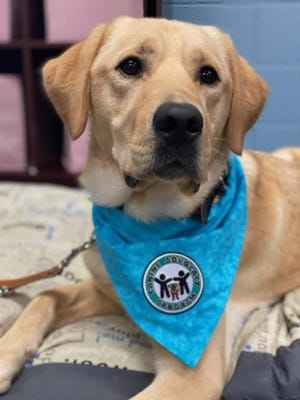 Alfred started training Sept. 21 at the Ionia Montcalm Secure and Friendly Environment Child Advocacy Center (IM SAFE CAC) in Fenwick. Alfred is IM SAFE CAC's first canine advocate and will work with child abuse victims in cases in both Ionia and Montcalm counties.