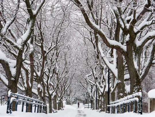 A pedestrian strolls along snow-covered trees on Battery