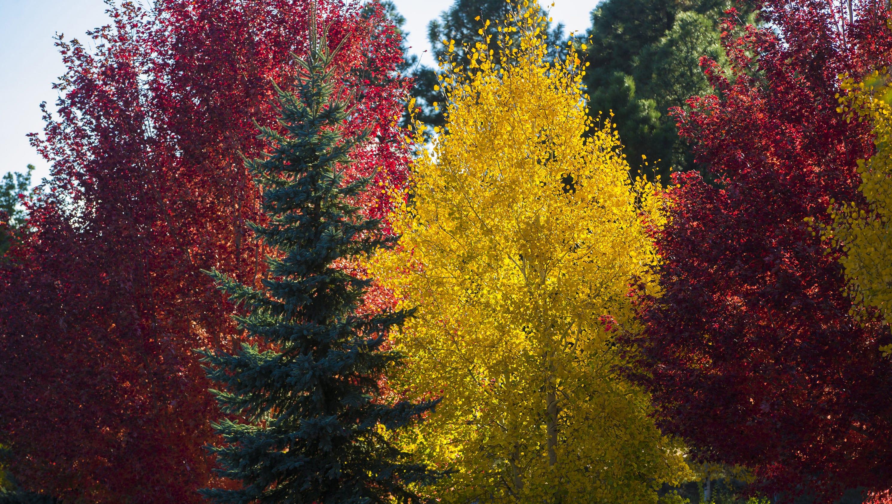 Oak Leaves Newspaper Apartments