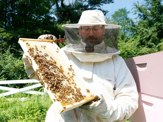 Beekeeper Zev Oster of Monsey working his beehives in Montebello in 2016. He has bought Nickel-O Farms.