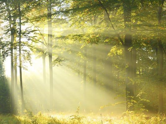 635858020030118453-Forest-Floor.jpg