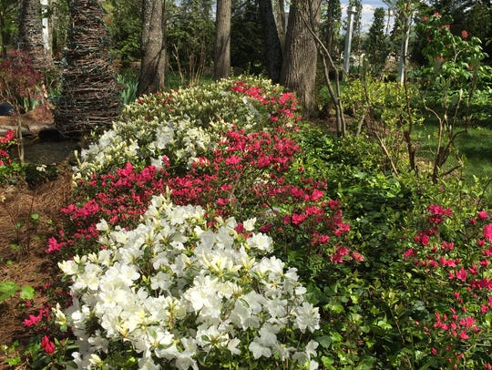 Flowering bushes add a pop of color to the secret garden