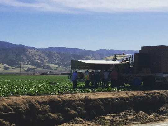 Workers in Salinas Valley on a recent day