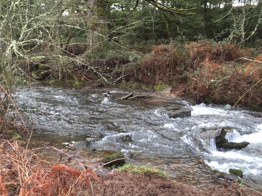 Bear Branch Creek watershed, a tributary of the North Santiam River.