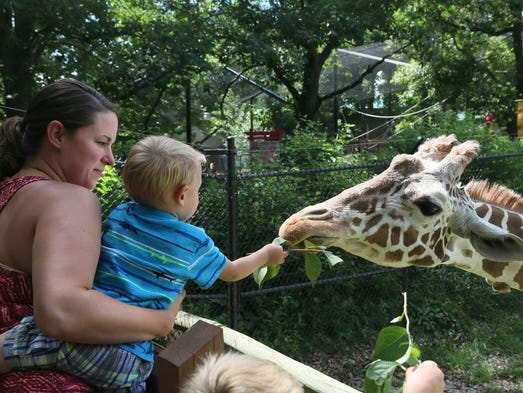 Lyndon Coffman feeds Shani the giraffe a bundle of honeysuckle while his mother Kristin watches his reaction to the animal Monday, July 14, 2014 at Blank Park Zoo.