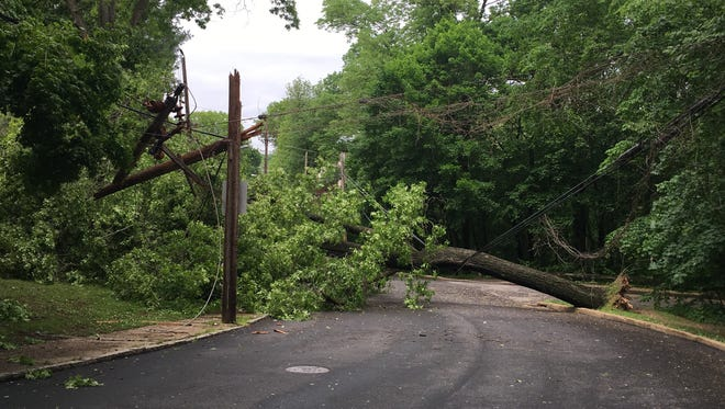 A downed tree had Wilmington road closed and power outages near Brandywine Park.