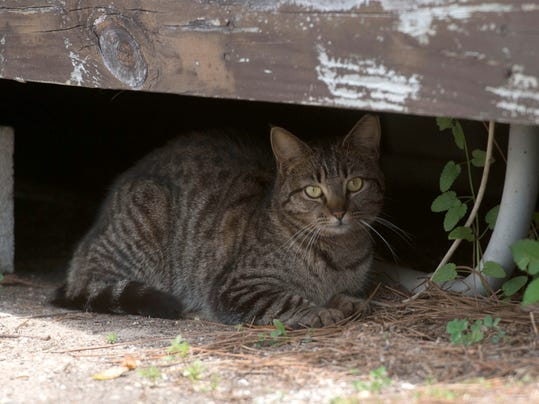 Feral Cat Rescue Ct