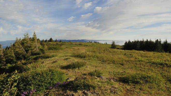 The summit of Mount Hebo in the Oregon Coast Range provides stunning panoramic views. Thursday, June 21, 2012.