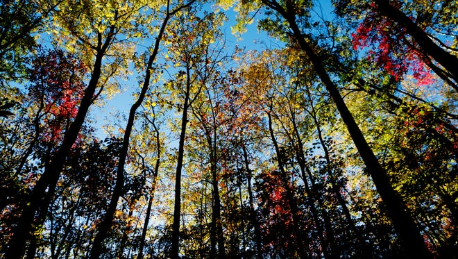 Trees change colors in Great Smoky Mountain National Park in Gatlinburg, Tennessee on Thursday, October 26, 2017.