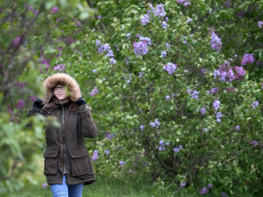 It was very cold on the last day, May 15, 2016,  of the Rochester Lilac Festival.