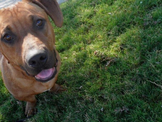 Riverside County offers free pets