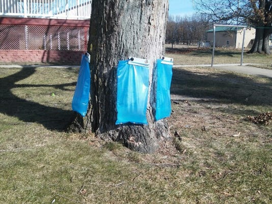 636229405676202911-TappingTreesWithPlasticBags.jpg