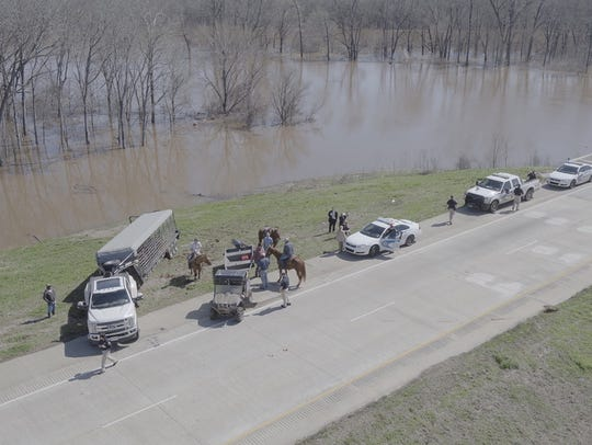 Several head of cattle were rescued from flooded Twelve