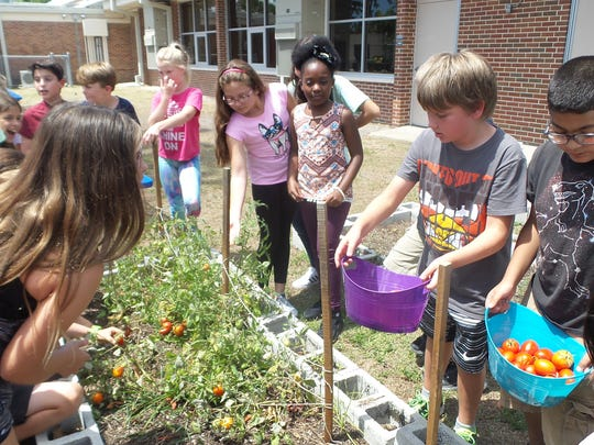 In April, Allen Park fifth-graders harvested tomatoes in an experiment to see what effect space has on seeds. Facing the camera, from left, are Nick Bloomston, Bryce Ware, Maddon McDonald, Sara Hernandez, Bency Abraham, Bradyn Metzger and Giovanni Patel.