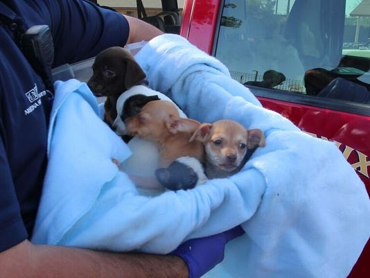 Puppy rescue in Phoenix
