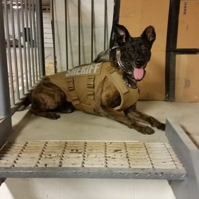 Livingston County Sheriff's K9 Flex received a new