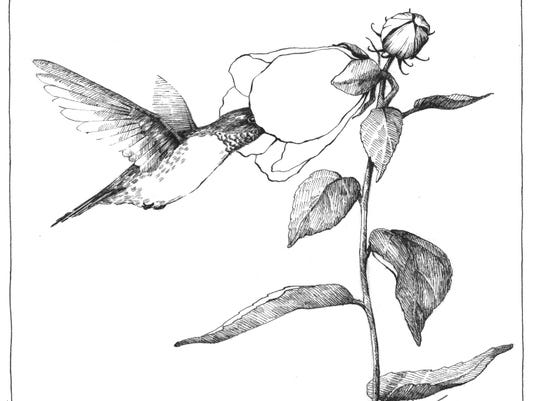 TOS-Hummingbird.jpg