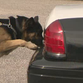 Behind the scenes: DPS K9 unit training