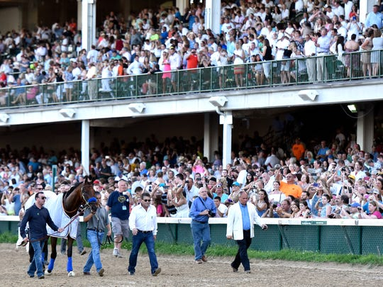 Kentucky Derby and Triple Crown winner American Pharoah is paraded in front of the crowd at Churchill Downs, Saturday, June 13, 2015. (Timothy D. Easley/Special to the C-J)