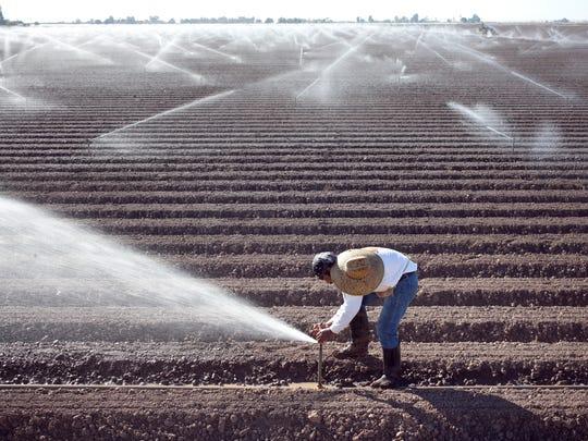 Jose Lopez repairs a sprinkler head in a lettuce field west of Yuma.