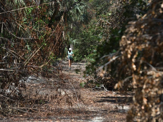 Stephanie Hahn, 64, of Orchid Island Golf and Beach Club, jogs south through the fallen tree branch littered north side of the Jungle Trail off County Road 510 on Thursday, Sept. 28, in Indian River County. Currently, local governments have the authority to require people to get permits before removing trees from private property. They also have authority to require mitigation when trees are removed. This authority would end if Senate Bill 574 becomes law.