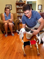 David VerMulm puts  Gypsy, the family's 15-year-old cat into a walker devise, on Thursday Sept. 3, 2015, that he build using house hold items. The family noticed that Gypsy was not using her back legs, so David VerMulm built this cart to help Gypsy strengthen her legs and get around the house. Jo VerMulm sits in the background.