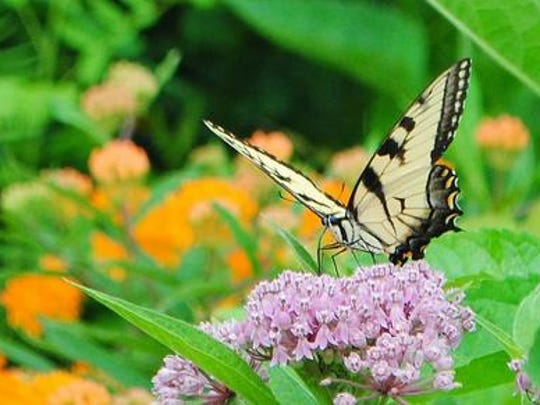 """The 2016 Pennsylvania Horticultural Society's Philadelphia Flower Show, """"Explore America,"""" will include """"Butterflies Live!,"""" a rare opportunity to interact with domestic and exotic varieties of butterflies."""