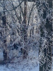 Taken from the front porch of Keith and Ronda Willett's house in Uniontown, this photo is taken from the property's tree line which was covered in frozen fog.
