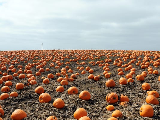 636093818961387448-160913-jd-pumpkins01.jpg
