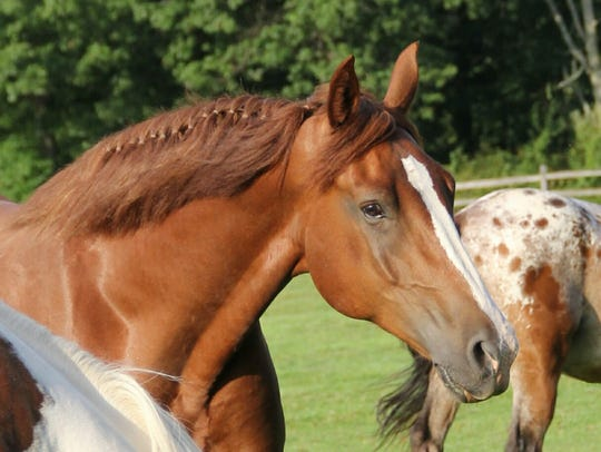 Non-riding Horse Care Workshops are scheduled year-round