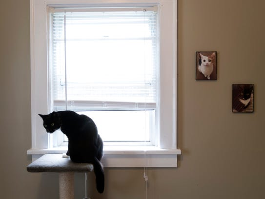 Photographs of Zeus and the shy Calico cat Penny hang