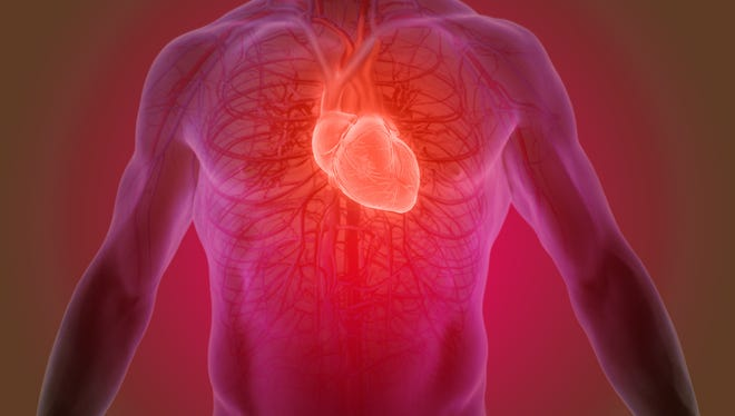 The heart provides oxygen and nutrients to the body as part of the body's circulatory system.