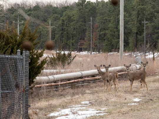 Four deer gather near piping that carries contaminated water to the treatment center from a groundwater extraction well at BASF. The former Ciba-Geigy Corp. Superfund site in Toms River, NJ, is now owned by BASF. Currently on the site BASF runs a new groundwater treatment system. /Russ DeSantis for the Asbury Park Press / Slug: ASB 0221 Former Ciba property