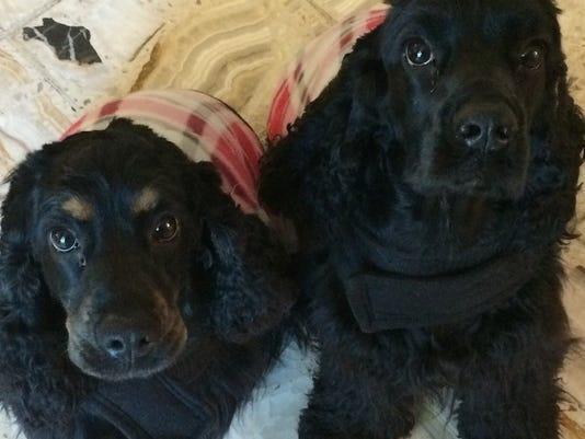 Pet Portraits: K-Zee and Gypsy