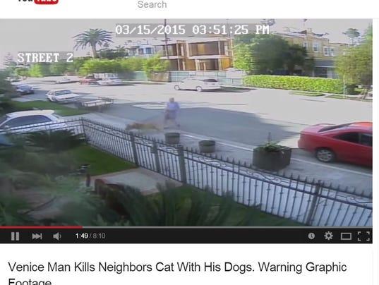 Dogs Attack Cat In Venice