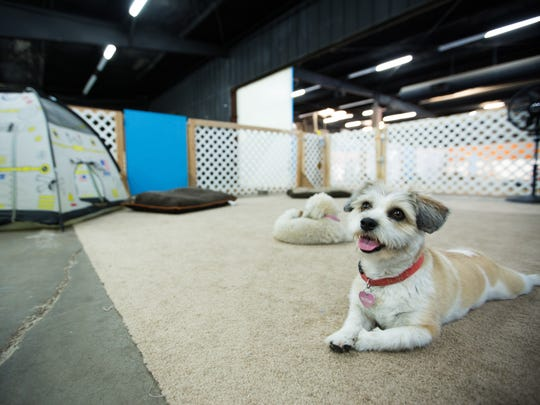 Ellen lays down in the Milky Way section of Your Pet Space July 20, 2016. The Milky Way is designed for nap time at Your Pet Space, a cage-free dog daycare and boarding facility.